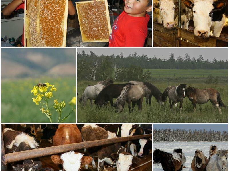 Увлекательная ферма